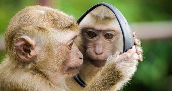 Apa Pentingnya Mengenal Diri Sendiri? Binatang Aja Bisa Kok Manusia Enggak